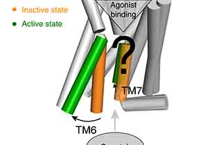 Discovery of Common Activation Mechanism for Class A GPCRs