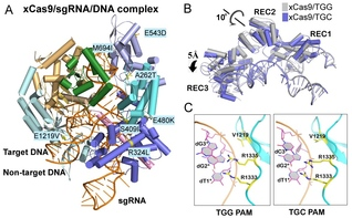 Uncovering the Molecular Mechanism of an Evolved Cas9 Nuclease